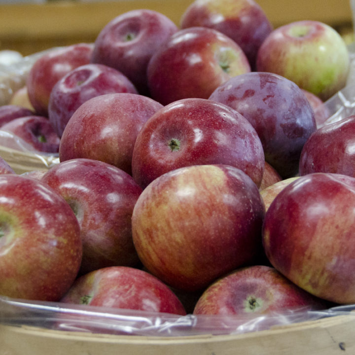 Cortland apples are ready!