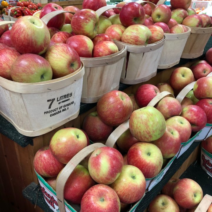 Honeycrisp apples are ready!