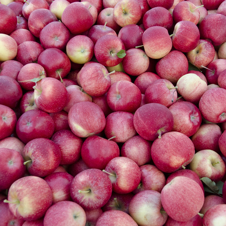 Gala apples are ready!