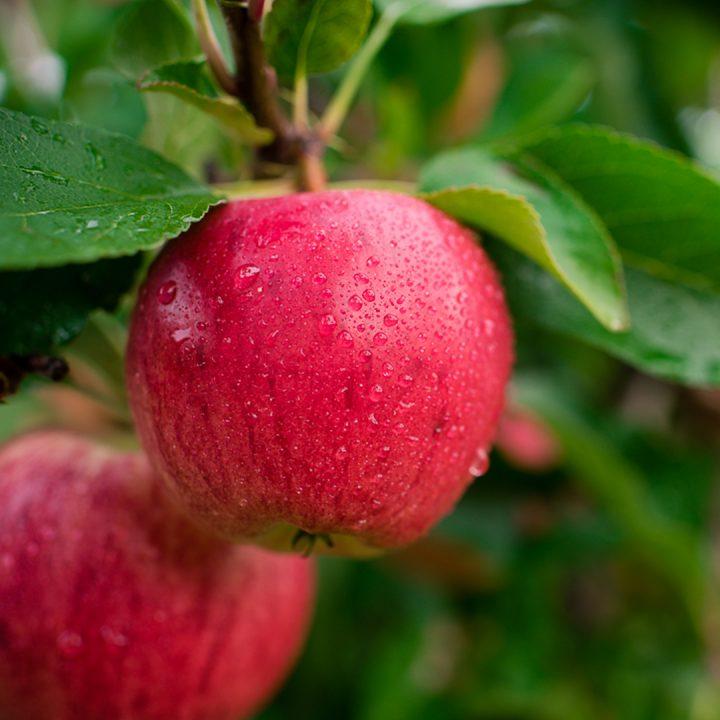 Martin S Family Fruit Farm Always Orchard Fresh