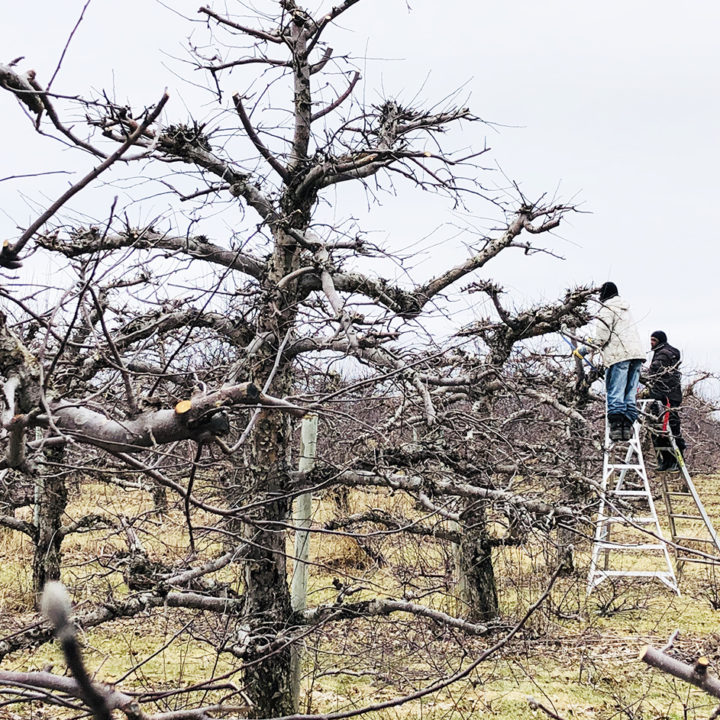 Spring means pruning season!